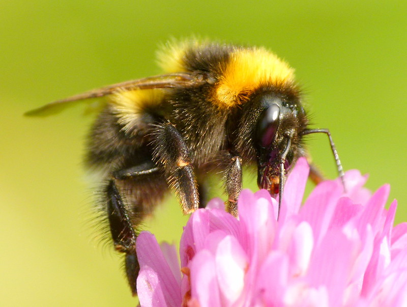 UN Report warns of catastrophic biodiversity crisis.